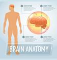 brain infographics banner vector image