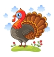 Cute cartoon character turkey vector image vector image