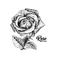 rose wine flower hand drawn ink pen vector image vector image