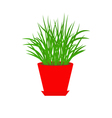 Grass in red flower pot Growing Icon Isolated vector image vector image
