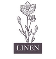 linen natural production plant with flowers and vector image vector image