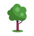 tree with massive trunk and green leaves vector image