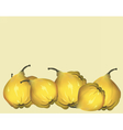 Yellow fresh quinces vector image vector image