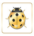 ladybug gold insect small icon golden metal lady vector image vector image