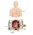 Open heart surgery vector image