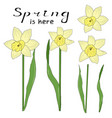 set of flower narcissus and leaves design vector image