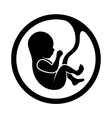 Fetus Icon Isolated on White Background vector image