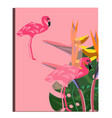 flamingo and strelitzia flower tropical summer vector image vector image
