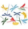 flat set of colorful dragonflies small vector image
