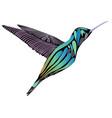 hummingbird isolated vector image vector image