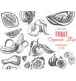 sketch - fruits card organic vector image