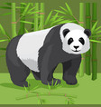 black and white heavy panda stands on paws bamboo vector image vector image