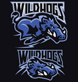 charging wild hog mascot set vector image