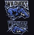 charging wild hog mascot set vector image vector image