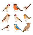 set european winter birds vector image vector image