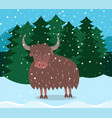 winter landscape and bull with horns in forest vector image vector image