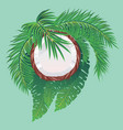 coconut half and palm leaves vector image