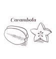 Engraving carambola vector image vector image