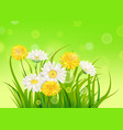 fresh spring juicy chamomile and dandelions vector image