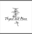 hand drawn herb thyme logo vector image vector image
