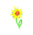 hand painted watercolor growing flower sunflower vector image vector image