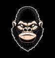 gorilla head design element for logo label sign vector image