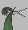Hand draw snail on blade of gras eps10 vector image vector image