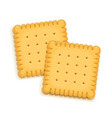 two delicious biscuit vector image vector image