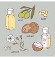 Healthy oil set Coconut walnut olive corn and vector image