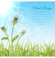 White dandelions on green grass vector image