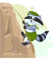 Climber descending rope Scout raccoon climbs rock vector image
