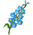 forget me not flower vector image vector image