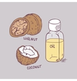 Healing coconut and walnut oils set in vector image