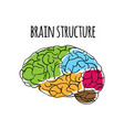 brain structure nervous system medicine ill vector image