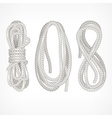 Coils of rope on white vector image