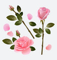 rose collection beautiful plant pink and red bud vector image