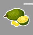 cartoon fresh jackfruit fruit isolated sticker vector image vector image