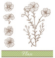 flax in hand drawn style vector image