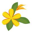 plumeria flower decoration icon vector image vector image