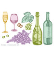 set hand drawn pastel grapes champagne vector image