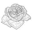 beautiful monochrome sketch black and white rose vector image vector image