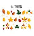 colorful set autumn leaves oak maple birch vector image vector image