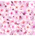 Seamless pattern with cherry blossom Blossoming vector image