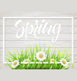 spring lettering with grass and chamomile vector image vector image