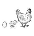 egg chicken and hen sketch vector image vector image