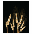 Wheat isolated on black vector image vector image