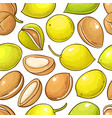 argan nuts pattern on white background vector image vector image