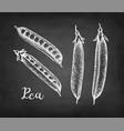 chalk sketch pea vector image