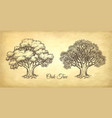 ink sketch of oak tree vector image vector image