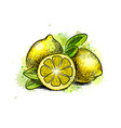 lemon with leaves from a splash of watercolor vector image vector image